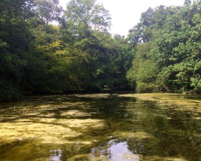 Lake Survey